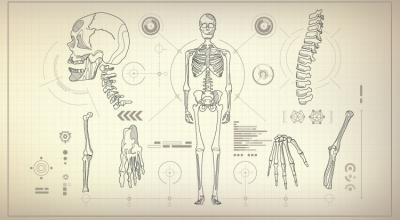 آناتومی کارکتر برای موشن گرافیک